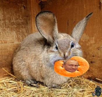 squabbit.jpg