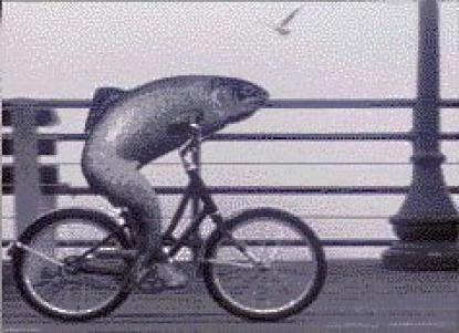 Fish_Bicycle.jpg