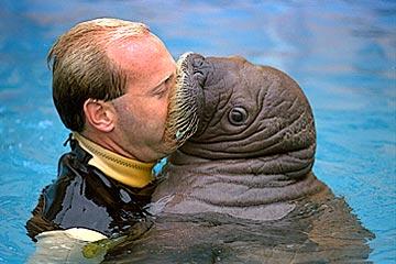 Funny Walrus_5.jpg