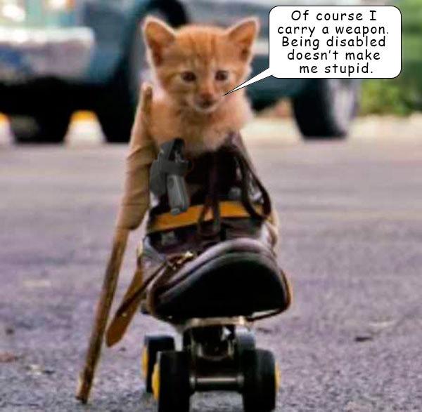 DisabledKittenArmed.jpg
