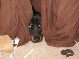 dog cowering 2.jpg