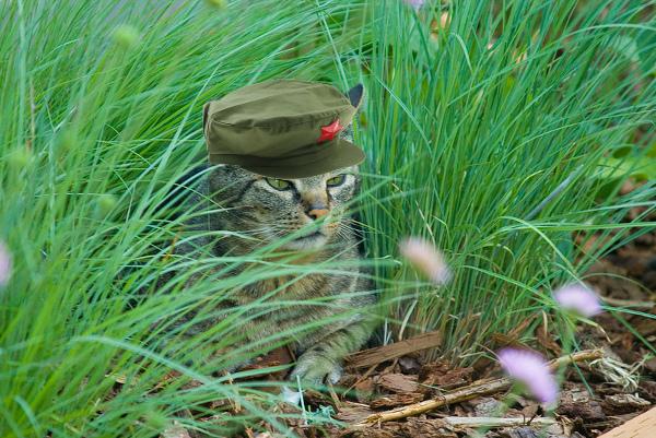 catweeds.jpg