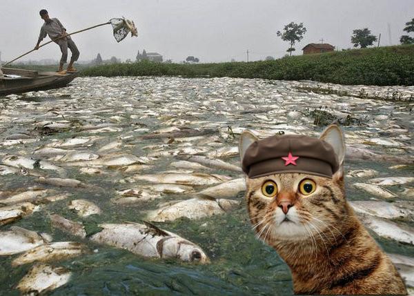 deadfish.jpg