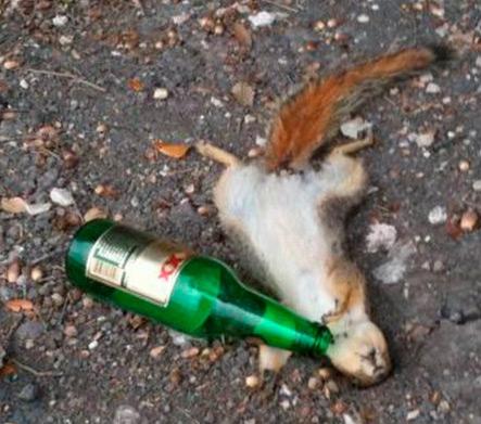 SquirrelCelebration.jpg