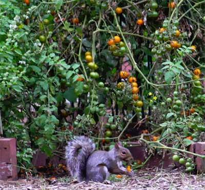 squirrel_berries.jpg