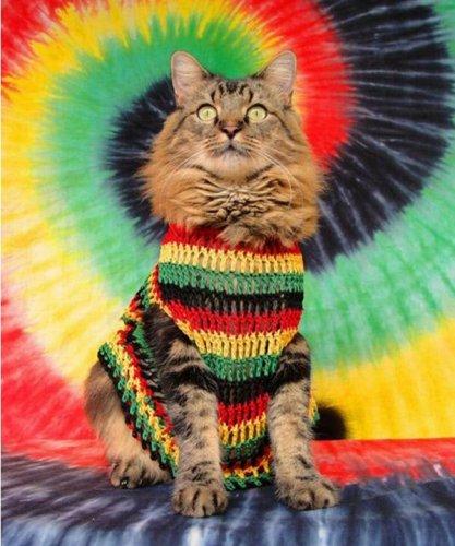 psychodelic kitty.jpg