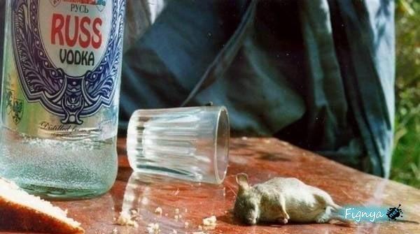 Mouse_Drunk_Vodka.jpg
