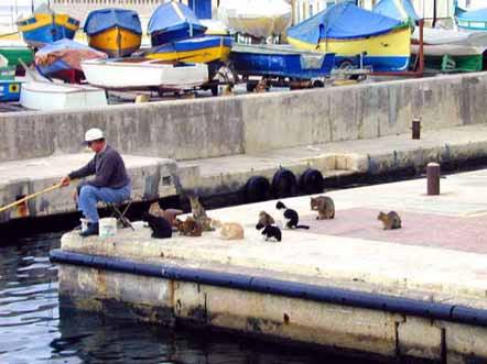 FishermanAndCatsLarge.jpg