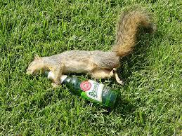 squirrel drunk.jpg