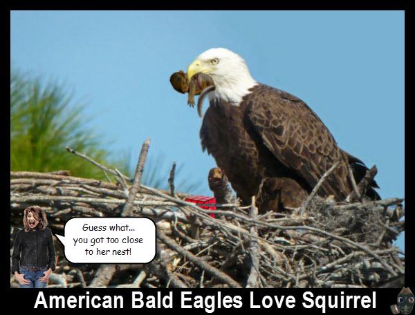 eagles-just-love-craptek.jpg