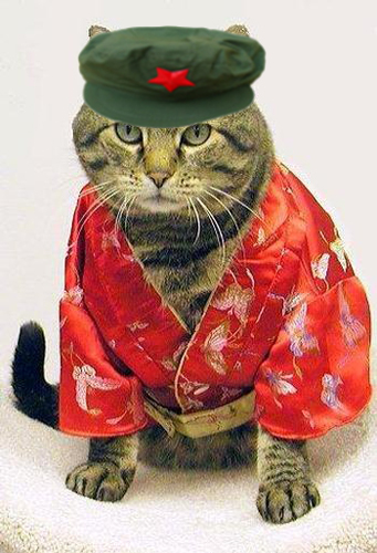 cat_red_pajamas1.jpg