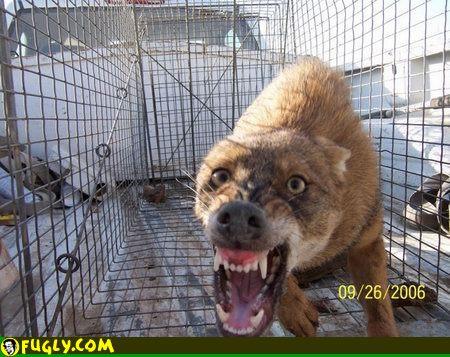 dangerous_dog.jpg