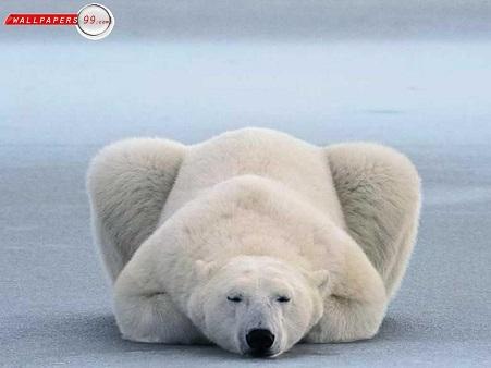 PolarBearYoga.jpg
