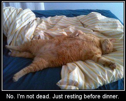 Tired cat.jpg
