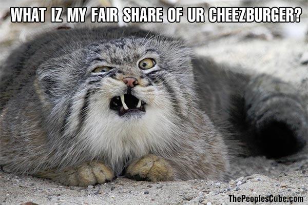 Cat_LOL_Cheezburger_FairShare.jpg