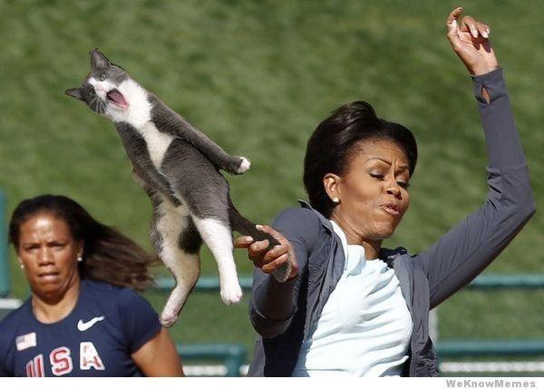 Cat_LOL_Michelle.jpg