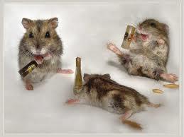 Drunk-mouse.jpg
