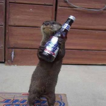 beer-stealing-weasel.jpg