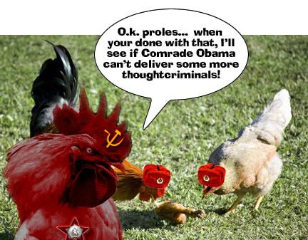chickens-eating-chicken.jpg