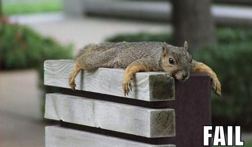 flying squirrel fail 1.jpg