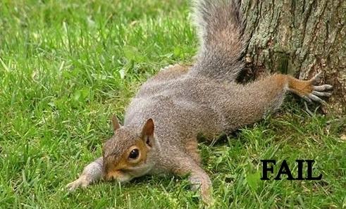 flying squirrel fail.jpg