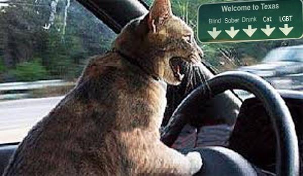 drivingcat.jpg