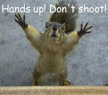 Squirrel-looking-up-with-hands-up.jpg