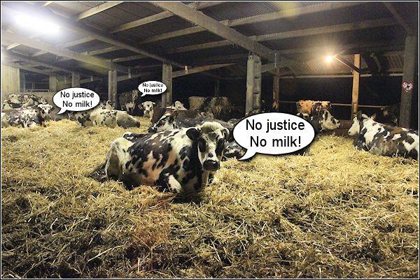 Cow Justice.jpg