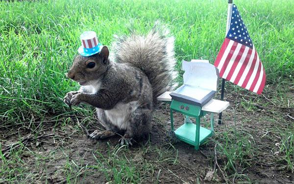 Squirrel_Sneezy.jpg