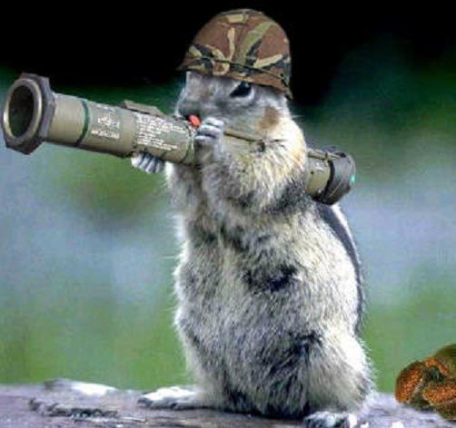 Army_Squirrel_by_ChocoboMoogles.jpg