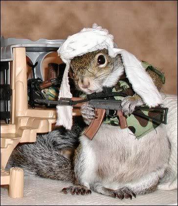 jihad squirrel.jpg