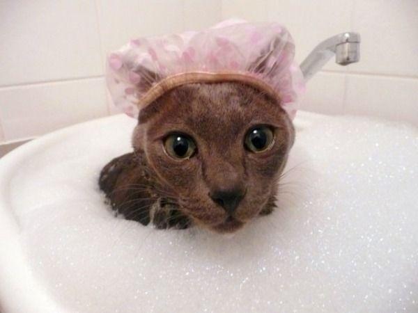 showercap.jpg
