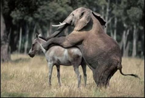 elephant-fucking-a-donkey.jpg