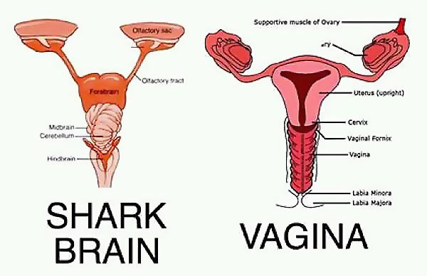 Shark_Brain_Vagina.jpg