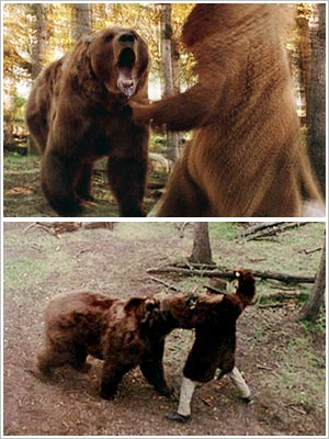 legends-of-the-fall-bear_l.jpg