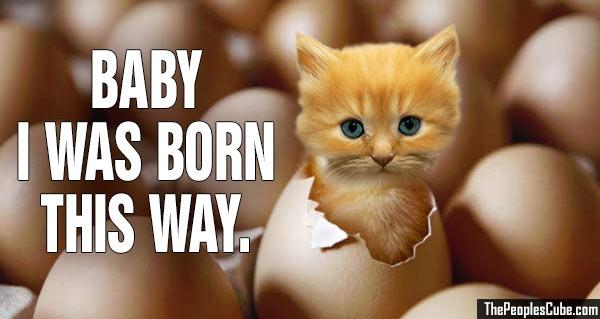 Chicken_Kitty_Born_this_way.jpg