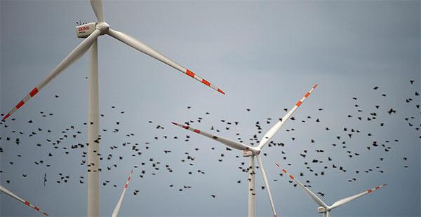 WindFarms_Birds.jpg