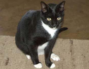 the_cat_is_missying_0.jpg