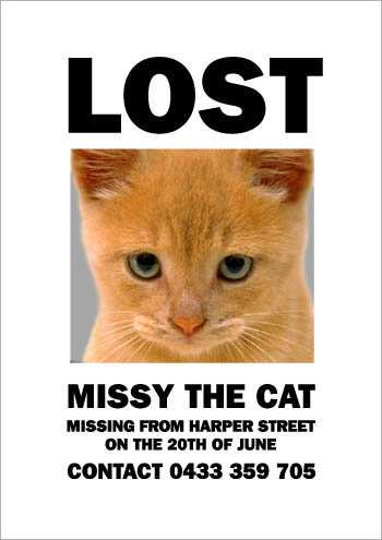 the_cat_is_missying_4.jpg
