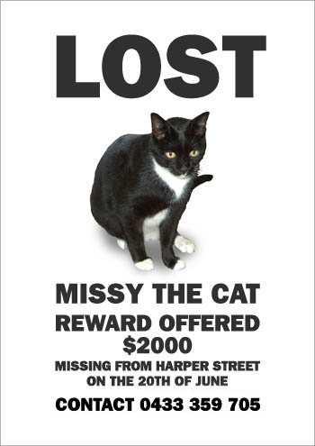 the_cat_is_missying_5.jpg