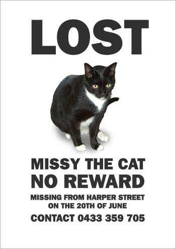 the_cat_is_missying_6.jpg