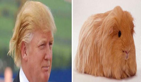 donald-trump-funny-look-alike-12__700.jpg