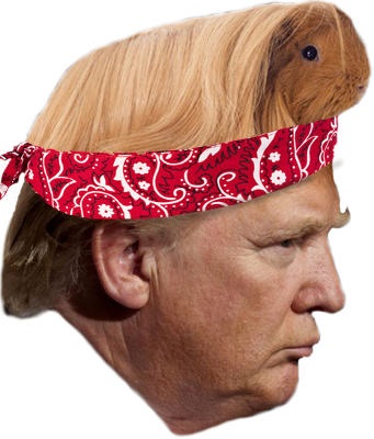 trump-with-long-coated-guinea-pig-on-head.png