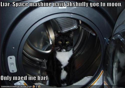 cat spin.jpg