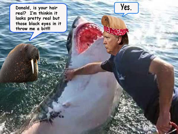 trump shark copy.jpg