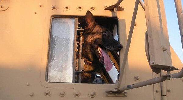 Dog_Hero_Major_Mike.jpg