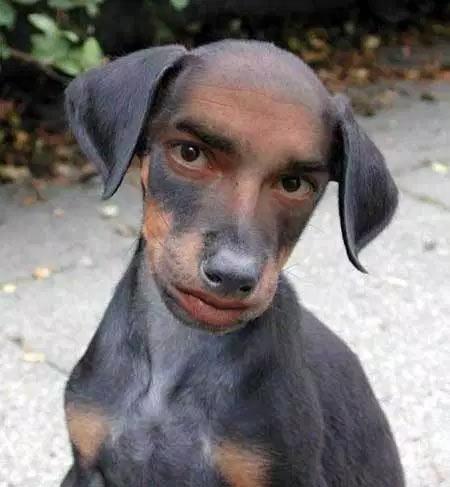 Human_Dog.jpg