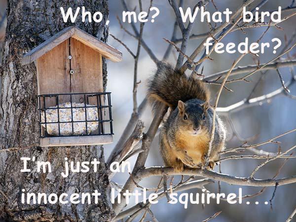 5256-Fox Squirrel 1.jpg