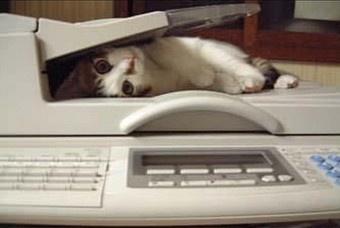 fax cat.jpg