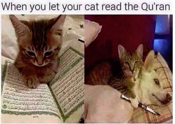 Cat_Reads_Koran.jpg
